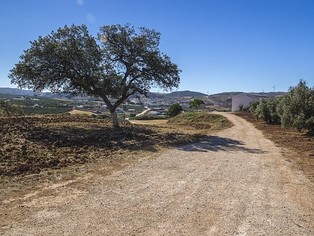 Encina, Path, Bed And Breakfast, Blue Sky, Olive Trees