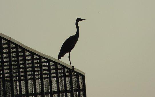 Bird, Heron, Animal, Pond, Pen, Nature, Ornithology