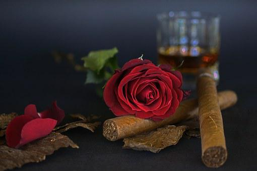 Rose, Red Rose, Cigar, Tobacco Leaves, Whiskey Glass