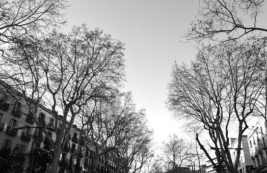 Ramblas, Street, Barcelona, Black And White, Autumn