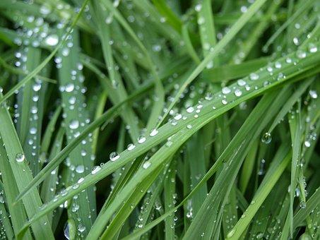 Dew, Grass, Nature, Green, Dewdrop, Drop Of Water, Wet