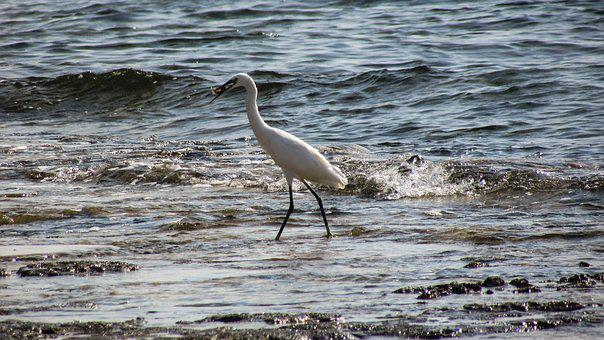 Heron, Fishing, Bird, Animal, Wildlife, Nature, Hunting