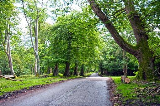 Road, Tarmac, Surface, Worn, Old, Lane, Asphalt