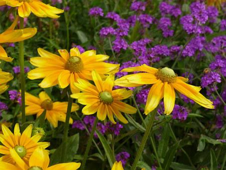 Flowers, Yellow, Garden, Nature, Plant, Violet, Green