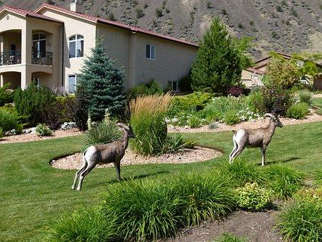 Mountain Sheep, Horn, Garden, Animal, Mammal