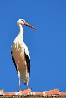 Stork, Roof, Pride, Adebar, Brick, Roofing, Bird