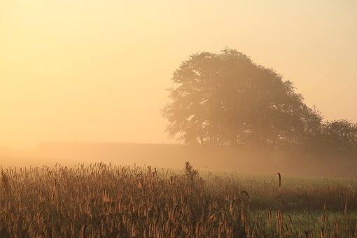 Morning, Hour, Sunrise, Tree, Field, Fog, Red, Yellow