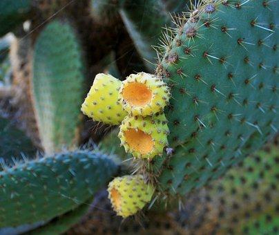 Cactus Bush, Bush, Cactus, Succulent, Leaves, Thick