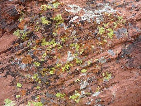 Moss, Rock, Desert, Nature, Stone, Natural, Outdoor