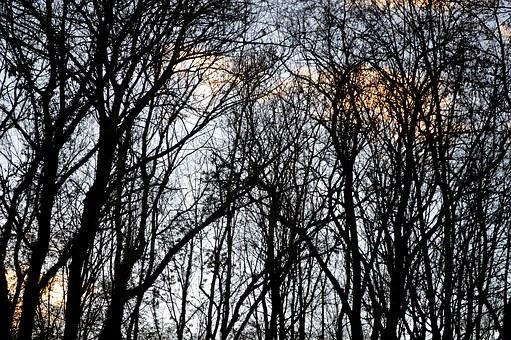 Forest, Winter, Nature, Trees, Trunk, Alsace, Wood