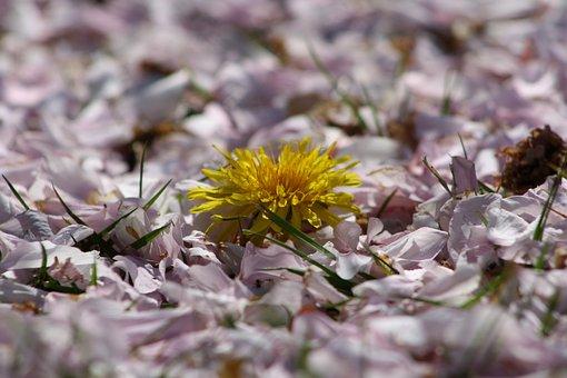 Peddles, Spring, Plant, Nature, Leaves, Season, Flower