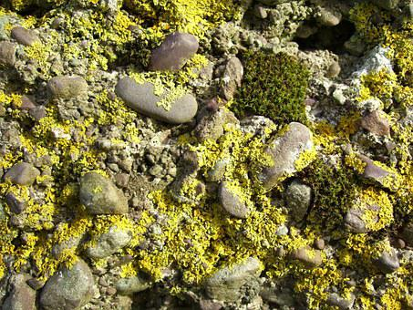 Moss, Mossy, Rock, Nature, Green, Natural, Stone