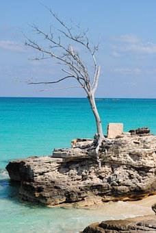 Tree, Ocean, Sea, Caribbean, Saint Martin, West Indies