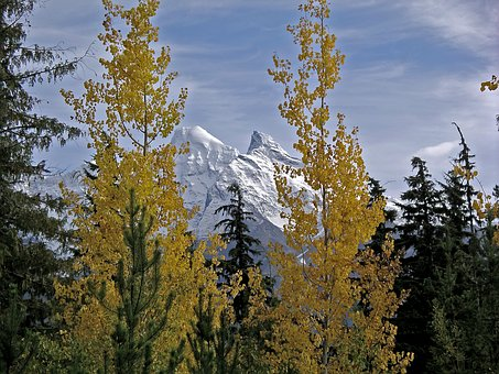 Snowcapped Mountains, Autumn Leaves, Winter