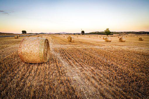 Agriculture, Countryside, Crop, Cropland, Dried, Farm