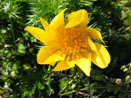 Wild Flowers, Flower, Yellow, Flower Galbelna