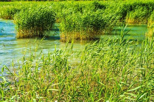 Reed, Water, Lake, Bank, Nature, Waters, Badesee