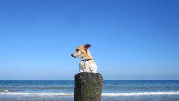 Beach, Pet, Jackrussell, Doggy, Dog, Sea, Ocean