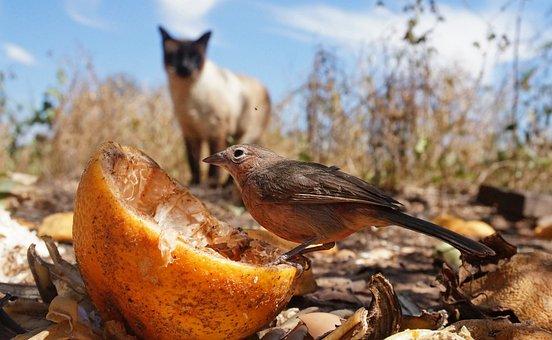 Prey, Hunt, Bird, Sparrow, Nature, Cat, Sneak Up On