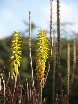 Blossom, Bloom, Aloe Vera, Agave, Flora, Nature