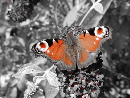 Butterfly, Butterfly Tree, Plant, Animal, Insect