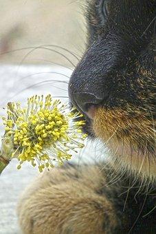 Cat, Willow Catkin, Animal