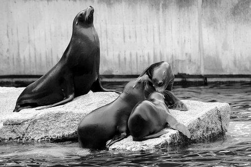 Sea Lion, Family, Boy, Crawl, Zoo, Acrobatic