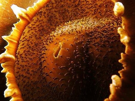 Anemone, Abstract, Marine, Underwater, Brown, Gold