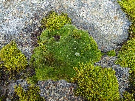 Moss, Drop Of Water, Stone, Green, Drip, Bemoost