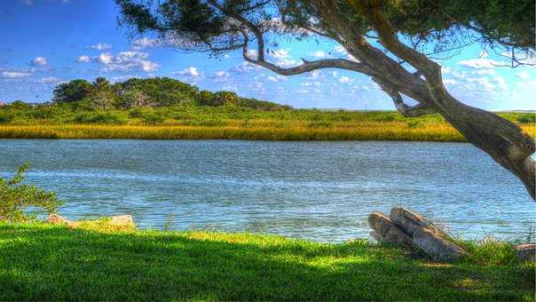 Tree, Water, Inlet, River, Intracoastal, Island, Green