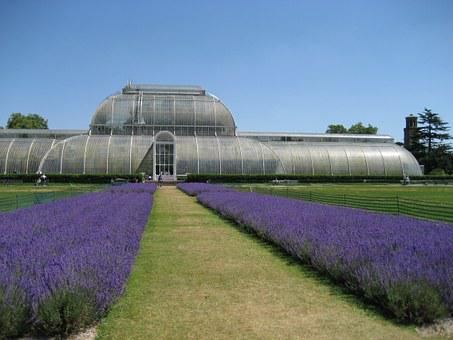 Kew Gardens, Lavender, London, England, Nature, Park