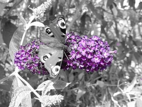 Butterfly, Butterfly Tree, Flower, Plant, Nature