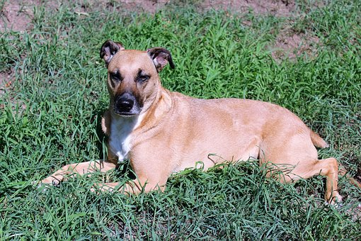 Dog, Grass, Laying, Relaxation, Relaxing, Shelter Dog