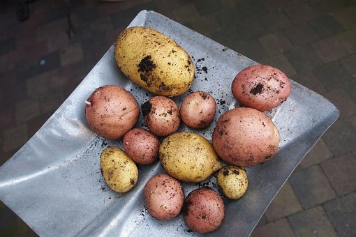 Potatoes, Types, Gardening, Harvest