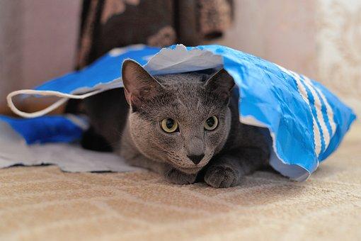 Cat, Animal, Pet, Fur, Fluffy Cat, Cat Person, Grey