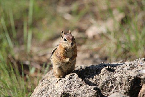 Squirrel, Flagstaff, Az