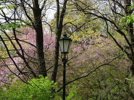 Spring, Lantern, Blooms, Flowers, Tree, Garden, Bloom