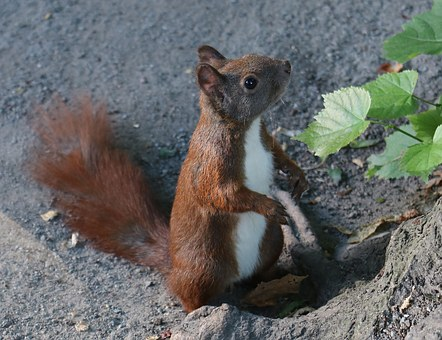 Squirrel, Animal, Nature, Tree, Forest, Cute, Green
