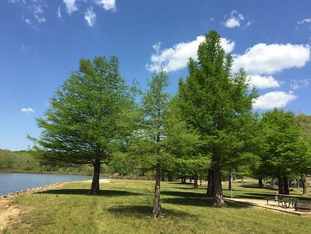 Park, Green Space, Outdoors, Lake, Picnic