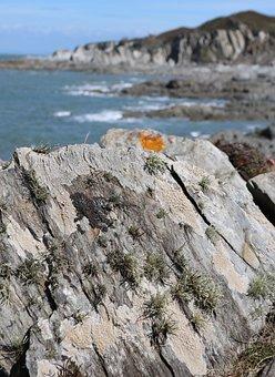 Rocks, Sea, Lichen, Landscape, Water, Sky, Beach, Cliff