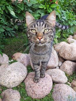Cat, Pet, Cute, View, Views, Striped, Darling