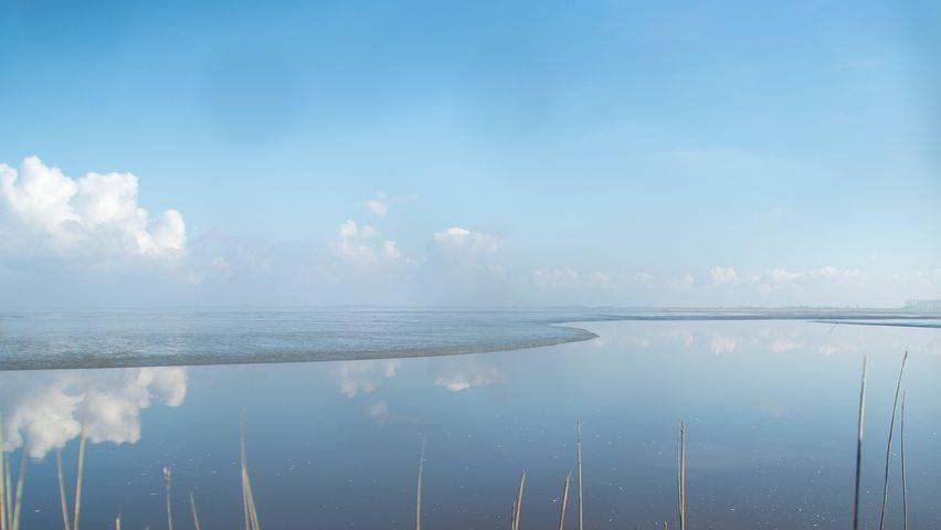 Water, Coast, Salt Marsh, Nature, Sea, Netherlands