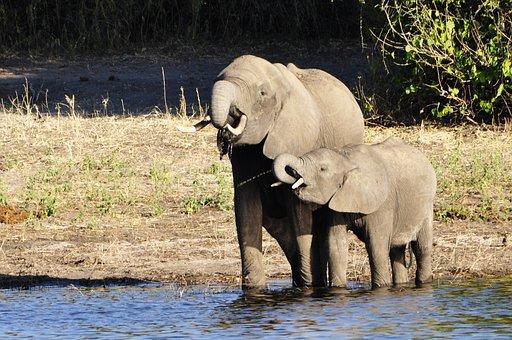 Elephant, Water Elephant, Dam, Calf, River, Water