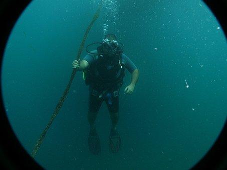 Fish, Diving, Sport, Deep, Ocean, Water, Nature