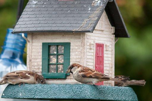 Birds, Birdfeeder, Sparrow, Food, Seeds, Cardinal