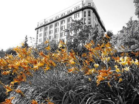 Flowers, Lily, Building, Victoria