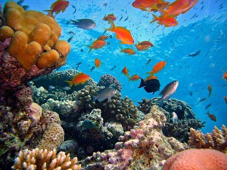 Diving, Underwater, Reef, Coral Reef, Water, Sea