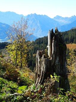 Tree Stump, Log, Storm Damage, Dead Plant