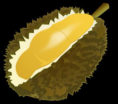 Durian Fruit, Fruit, Food, Durio, Malvaceae, Thailand