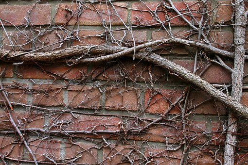Wall, Tree Roots, Entwine, Facade